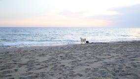 Δύο σκυλιά που παίζουν στην παραλία φιλμ μικρού μήκους