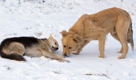 Δύο σκυλιά στο χιόνι το χειμώνα στοκ εικόνα