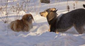 Δύο σκυλί-μικρά και μεγάλος-παιχνίδι στο χνουδωτό χιόνι στοκ εικόνες