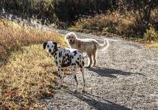 Δύο σκυλιά που κοιτάζουν/που κοιτάζουν επίμονα Στοκ φωτογραφία με δικαίωμα ελεύθερης χρήσης