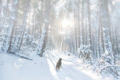 Δύο σκυλιά που οργανώνονται στο χιονώδες δάσος Στοκ Εικόνα