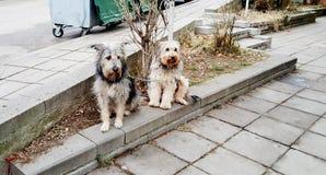 Δύο σκυλιά που περιμένουν στην οδό στοκ φωτογραφία