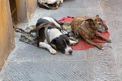 Δύο σκυλιά στο λουρί βάζουν στο ύφασμα στο outsi αναμονής για τους πεζούς πορειών Στοκ Εικόνες