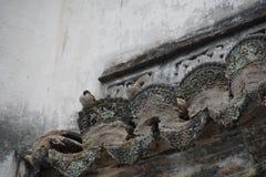 Δύο σπουργίτια σε μια αρχαία κινεζική στέγη Στοκ Φωτογραφίες