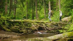 Δύο τουρίστες διασχίζουν τον ποταμό βουνών κατά μήκος ενός πεσμένου δέντρου Περιπέτειες και ένας ενεργός τρόπος της ζωής απόθεμα βίντεο