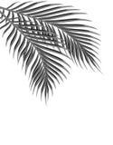 Δύο τροπικά φύλλα φοινικών black white η ανασκόπηση απομόνωσε το λευκό απεικόνιση διανυσματική απεικόνιση