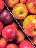 Δύο τύποι μήλων Στοκ Εικόνα