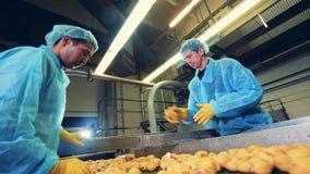 Δύο υπάλληλοι εργοστασίων κόβουν τους βολβούς πατατών απόθεμα βίντεο