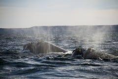 Δύο φάλαινες στη θάλασσα Στοκ Εικόνα