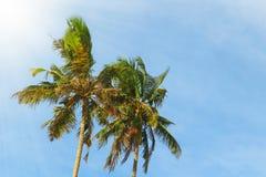 Δύο φοίνικες ενάντια στο μπλε ουρανό που φωτίζεται από τον ήλιο Στοκ φωτογραφία με δικαίωμα ελεύθερης χρήσης