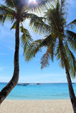 Δύο φοίνικες σε έναν τροπικό παράδεισο. Άσπρη παραλία άμμου του νησιού Boracay, Φιλιππίνες Στοκ εικόνες με δικαίωμα ελεύθερης χρήσης