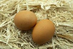Δύο φρέσκα αυγά σε μια κλινοστρωμνή του φρέσκου αχύρου στοκ φωτογραφίες με δικαίωμα ελεύθερης χρήσης