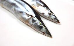 Δύο φρέσκα ειρηνικά saury ψάρια Στοκ εικόνες με δικαίωμα ελεύθερης χρήσης
