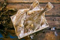 Δύο φρέσκοι πλευρονήκτες στον πάγο με kelp το φύκι Στοκ εικόνες με δικαίωμα ελεύθερης χρήσης