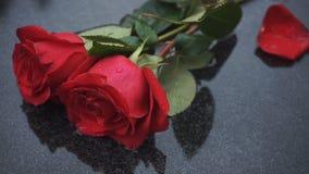 Δύο φωτεινά κόκκινα τριαντάφυλλα σε μια πέτρα στη βροχή απόθεμα βίντεο
