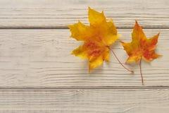 Δύο φύλλα σφενδάμου φθινοπώρου πέρα από το ξύλινο υπόβαθρο Στοκ εικόνα με δικαίωμα ελεύθερης χρήσης