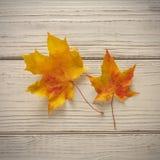Δύο φύλλα σφενδάμου φθινοπώρου πέρα από το ξύλινο υπόβαθρο Στοκ φωτογραφίες με δικαίωμα ελεύθερης χρήσης