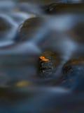 Δύο φύλλα από κοινού Στοκ Φωτογραφίες