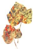 Δύο φύλλα του κισσού Στοκ Εικόνες
