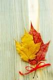 Δύο φύλλα φθινοπώρου είναι δεμένα με ένα κώλυμα Στοκ φωτογραφία με δικαίωμα ελεύθερης χρήσης