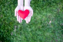 Δύο χέρια που κρατούν την κόκκινη καρδιά με το πράσινο υπόβαθρο χλόης Η έννοια δίνει την αγάπη στοκ εικόνα