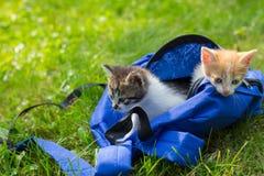 Δύο χαριτωμένα γατάκια που φαίνονται από την τσάντα την πρώτη φορά υπαίθρια Στοκ φωτογραφία με δικαίωμα ελεύθερης χρήσης