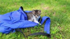 Δύο χαριτωμένα γατάκια που φαίνονται από την τσάντα την πρώτη φορά υπαίθρια απόθεμα βίντεο
