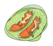 Δύο χαριτωμένες αλεπούδες Στοκ Φωτογραφία