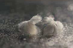 Δύο χνουδωτά φτερά πουλιών σε ένα αργυροειδές υπόβαθρο με ένα bokeh Στοκ εικόνα με δικαίωμα ελεύθερης χρήσης