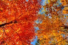 Δύο χρώματα του φθινοπώρου Στοκ φωτογραφίες με δικαίωμα ελεύθερης χρήσης