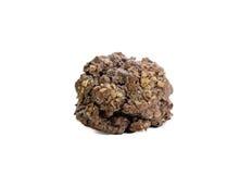 Δύο ψημένα μπισκότα σοκολάτας ξύλων καρυδιάς που απομονώνονται στο άσπρο υπόβαθρο Στοκ Φωτογραφία