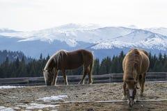 Δύο όμορφα άλογα Στοκ Εικόνες