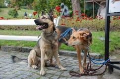 Δύο όμορφα σκυλιά στους κήπους του κάστρου Cesky Krumlov στοκ εικόνα