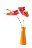 Δύο Anturie λουλούδι Στοκ φωτογραφία με δικαίωμα ελεύθερης χρήσης