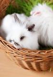 Δύο bunnies Πάσχας είναι στο καλάθι Στοκ φωτογραφία με δικαίωμα ελεύθερης χρήσης