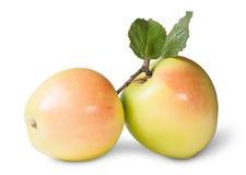 Δύο Juicy Apple με το πράσινο φύλλο Στοκ Φωτογραφία