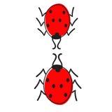 Δύο ladybugs που απομονώνονται Στοκ Εικόνες