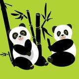 Δύο pandas κάθονται στα ξύλα και τρώνε το μπαμπού Στοκ Φωτογραφίες