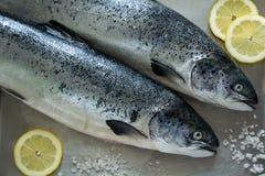 Δύο salmons σε μεταλλικό Στοκ εικόνα με δικαίωμα ελεύθερης χρήσης