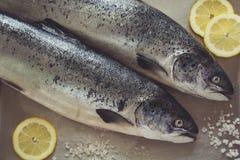 Δύο salmons σε μεταλλικό Στοκ Εικόνες