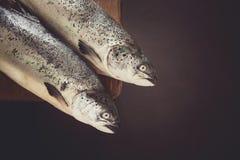 Δύο salmons Στοκ εικόνες με δικαίωμα ελεύθερης χρήσης