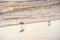 Δύο seagulls σίτιση στοκ φωτογραφία με δικαίωμα ελεύθερης χρήσης