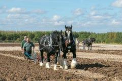 Δύο shire άλογα που οργώνουν παρουσιάζουν Στοκ εικόνα με δικαίωμα ελεύθερης χρήσης
