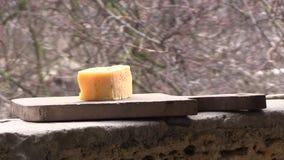 Δύο tits τρώνε το τυρί απόθεμα βίντεο