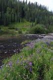 δύσκολα wildflowers βουνών του Κ&omicr στοκ εικόνα