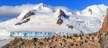 Δύσκολη ακτή με το κοπάδι του gentoo pengins και παγετώνας με το ολοκληρωμένο κύκλωμα Στοκ Εικόνες