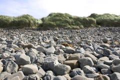 Δύσκολη παραλία στη ιρλανδική αγελάδα Ιρλανδία Στοκ Εικόνες