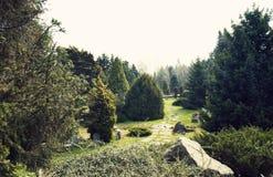 Δύσκολος δρόμος στο δάσος στοκ εικόνες