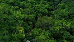 Δύσκολος ποταμός και πράσινο δάσος στο εναέριο τοπίο βουνών Ποταμός βουνών με τη μεγάλη άποψη κηφήνων πετρών άγριο δάσος τραγουδι απόθεμα βίντεο