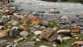 Δύσκολος ποταμός που ρέει στην κοιλάδα βουνών Γρήγορο ρεύμα του ποταμού βουνών απόθεμα βίντεο